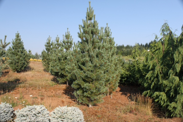 BigTreeSupply.com: Trees and Soil Types