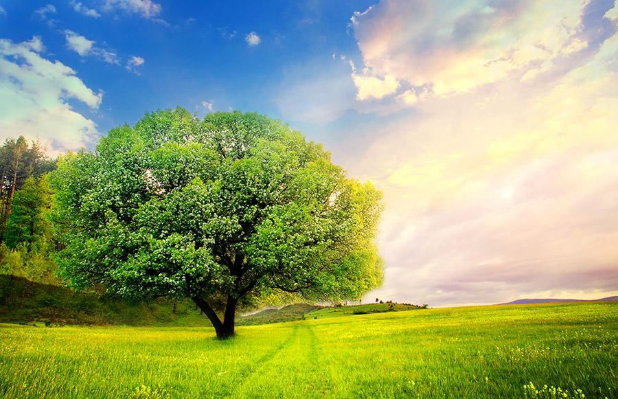Big Trees Inc. Saves an Oak Tree for an Elementary School