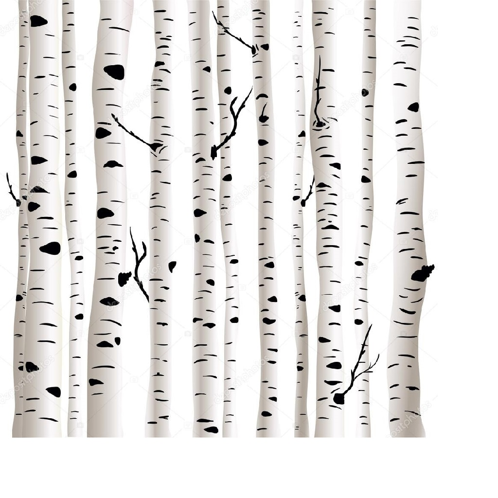 BigTreeSupply.com: Can Your Birch Trees Be Saved?