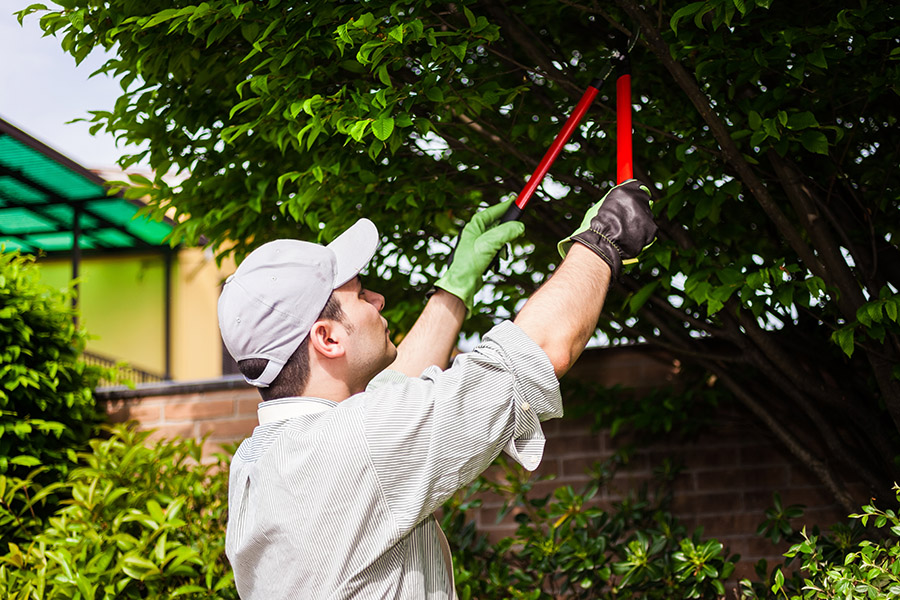 The Best Time To Get Tree Inspections and Pruning