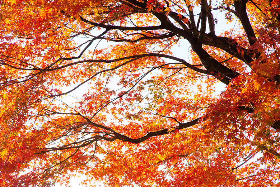 Big Trees Inc. Helped a Seattle Company Transplant Large Trees