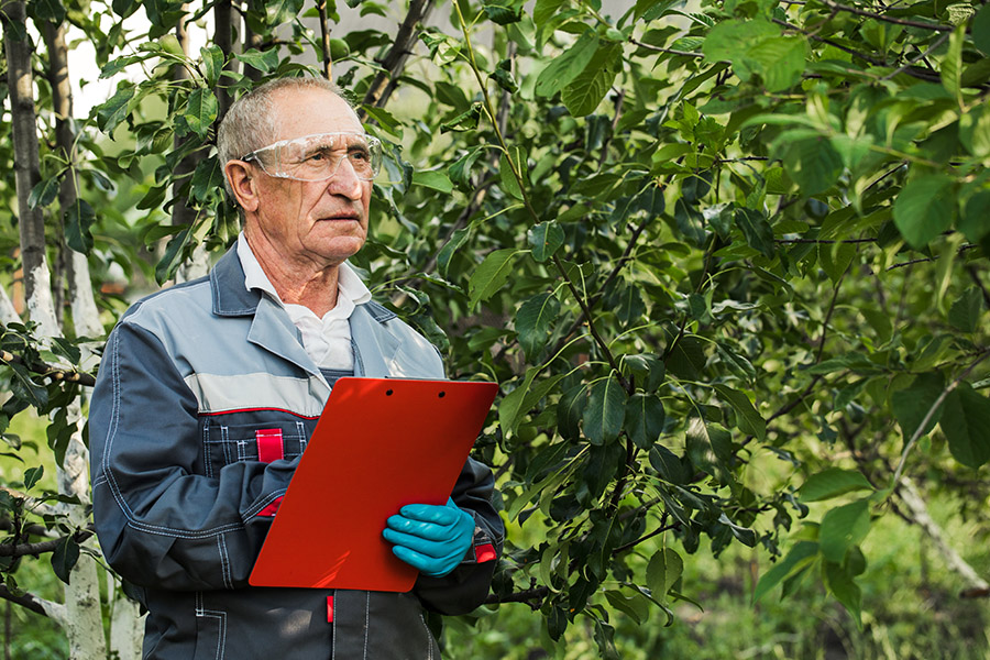 When Should You Get Your Trees Inspected?