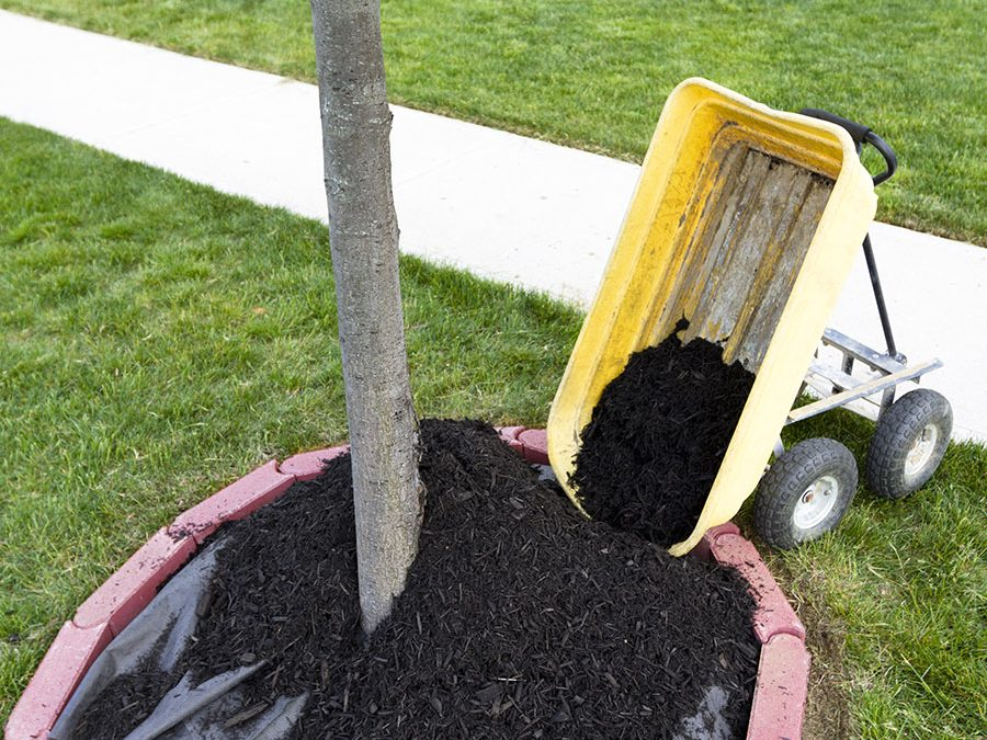 Top 7 Tips for Summer Tree Care